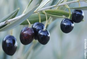 Olive Groves Guided Tour In Seville